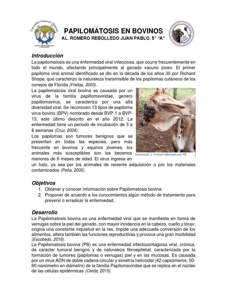 papilomatosis bovina historia condilomul a apărut la unul dintre parteneri