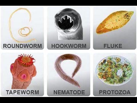 paraziti in organism paraziți, cum să scapi rapid de ei