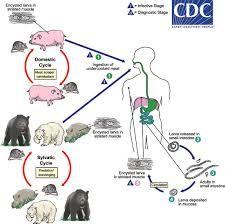 paraziti in organism