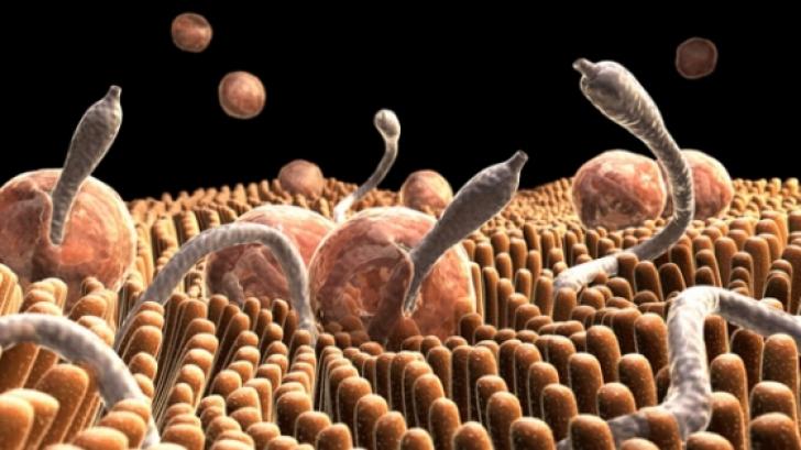 o pastila mare numita viermi