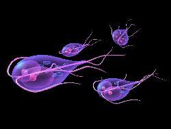 kako leciti parazite u crevima