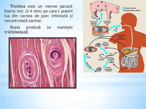 papilloma virus uomo cure
