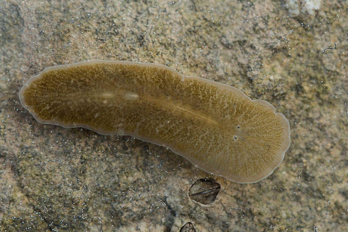 specii de vierme