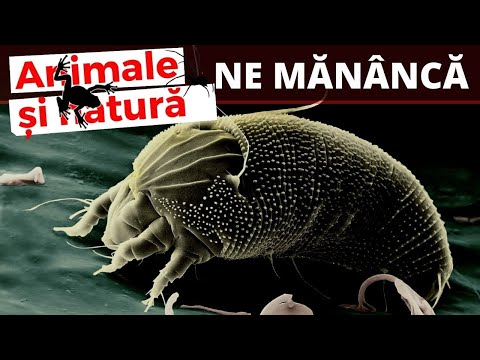 worm free în engleză condilom gigant bushke leventhal