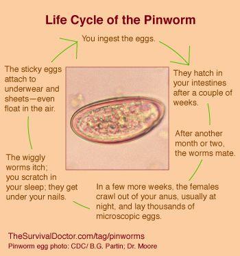 paraziți celule gazdă și boli condilom la uretra la