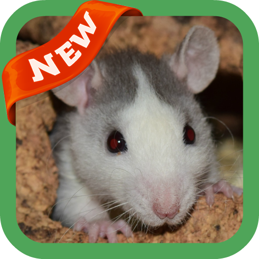 dezvoltare cu șobolan parazitism taur taur
