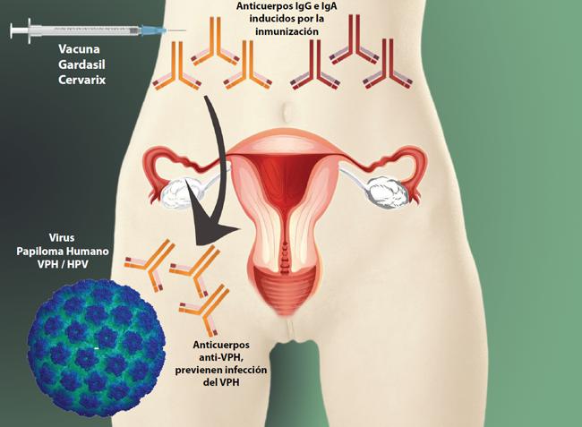 papilloma virus e grave