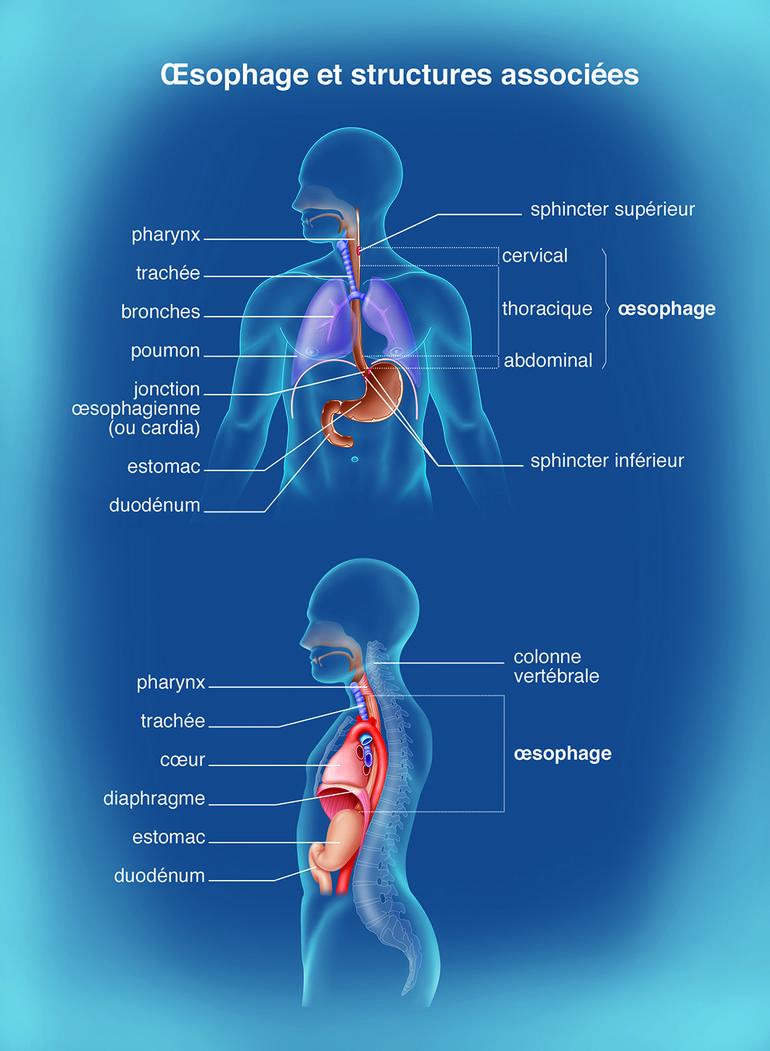Oesophage et papillomavirus,