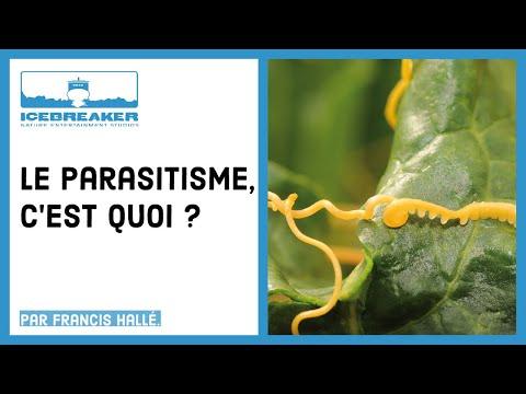 habitat parazit de viermi