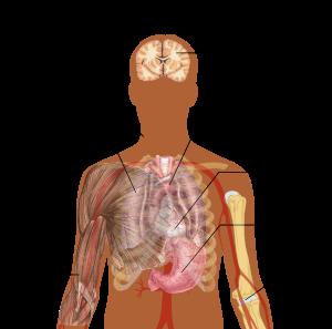 paraziții din plămâni sunt simptome)