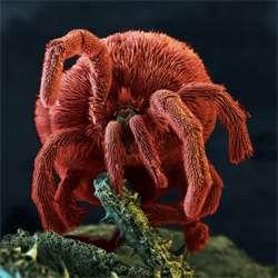 Helminti i paraziti, Parazit na kuzi