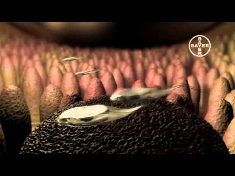 tratamentul și prevenirea viermilor umani