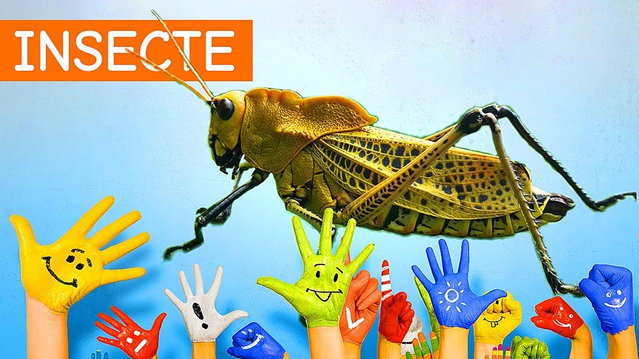 simptomele parazitelor fluturilor hepatice