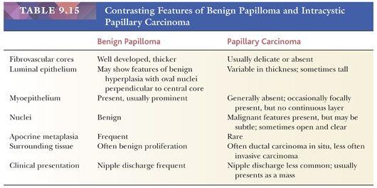 hpv papilloma virus sta je