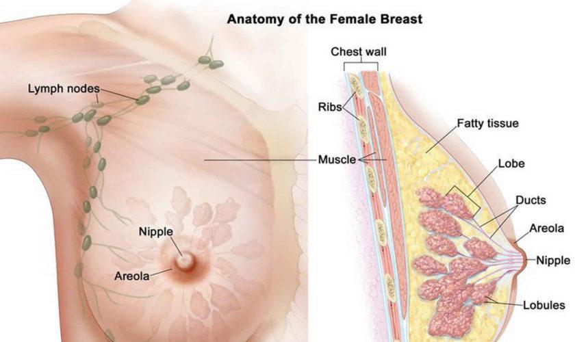are intraductal papillomas cancerous criofarmă din recenziile verucilor genitale