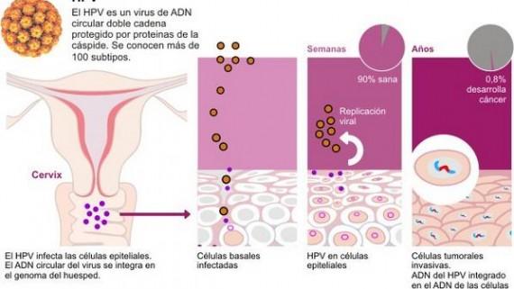 hpv virus of herpes