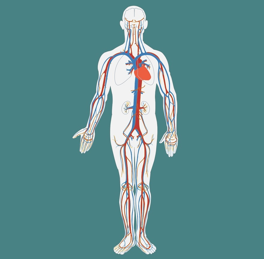 wart on foot podiatrist or dermatologist ce medicament ajută viermii la adulți