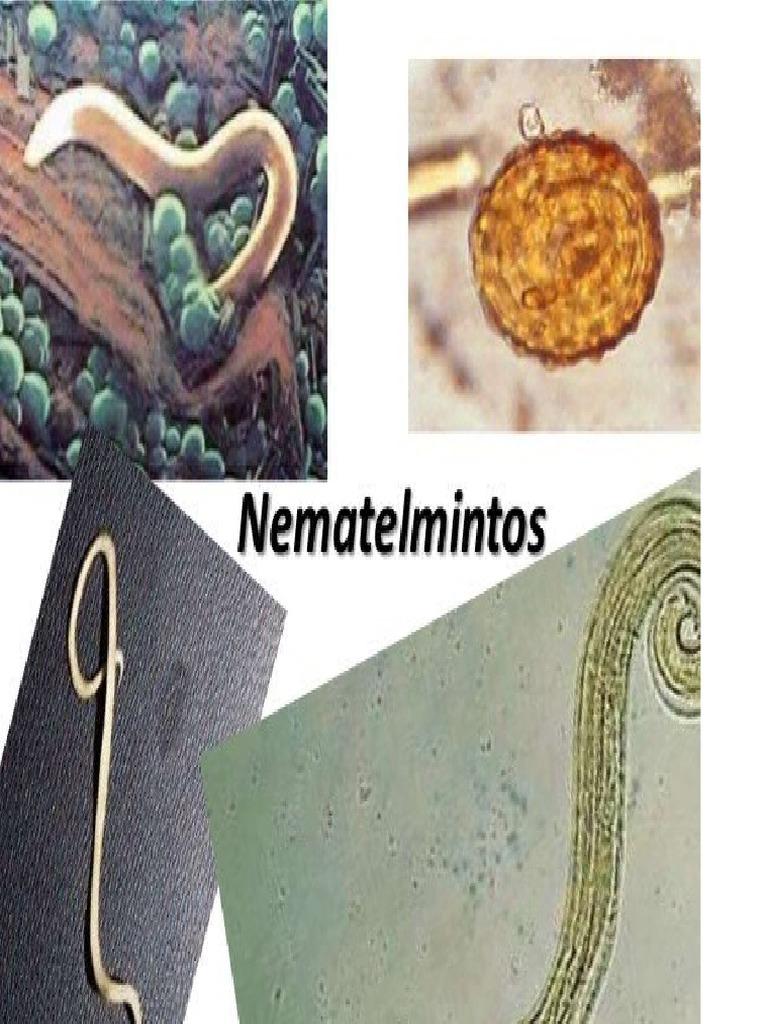 nemathelminthes reproducere