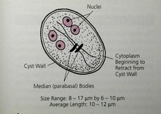 infecție în giardioză paraziti raw paleo dieta