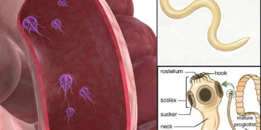 lamblii simptome adulti