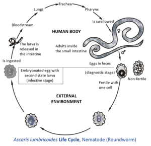 diagnosticul viermilor cancer de colon minsal