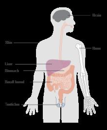 metastatic cancer meaning in bengali curatarea intestinelor de toxine
