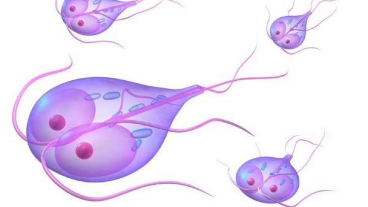 que es la oxiuriasis y sus sintomas papilloma virus vaccino verruche