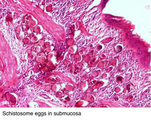 Paraziti kod macke Parazit tablete, Paraziti kod macke