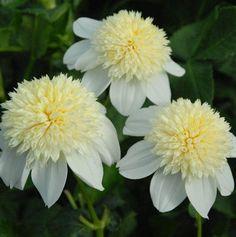 SelfWatering flori Ghiveci Plastic Auto leneş ghiveci plantator coş alb S
