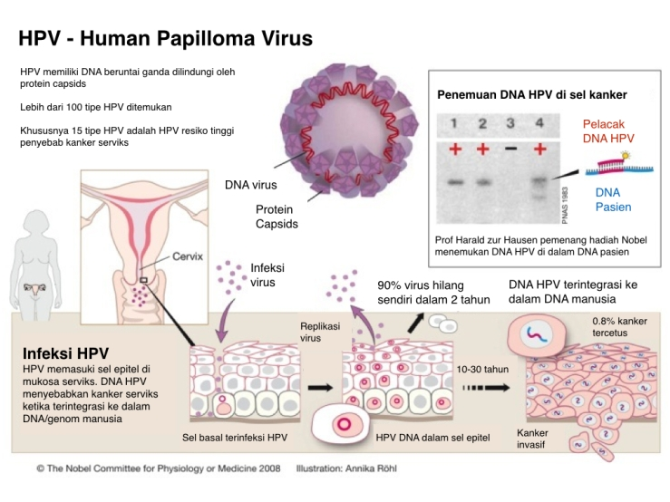 Human papilloma virus penyebab